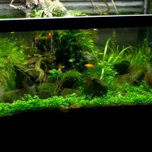 20L Freshwater Planted Tank (2013)