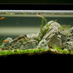 Eruption – 20L Freshwater Planted Aquarium