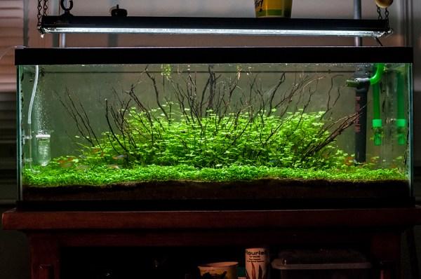 Explosion – 20L Freshwater Planted Aquarium