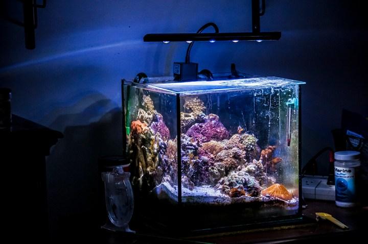 12 Gallon Nano Reef Tank