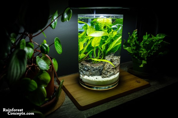 a nano freshwater planted aquarium built in a vase. Also known as a Jarrarium