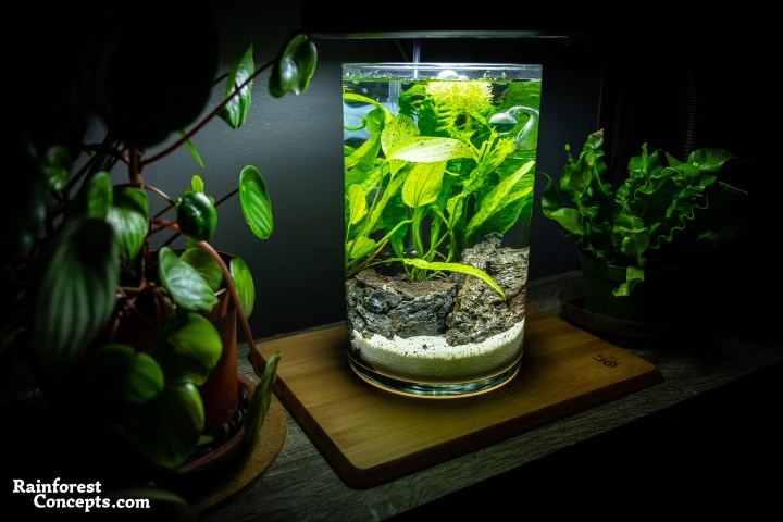 a nano freshwater planted aquarium built in a vase. Also known as a Jarrarium