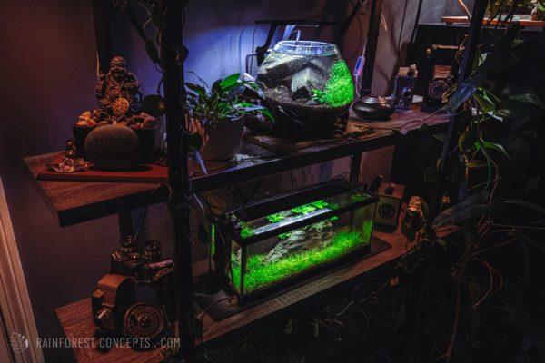Nano low-tech planted aquariums on a bookshelf