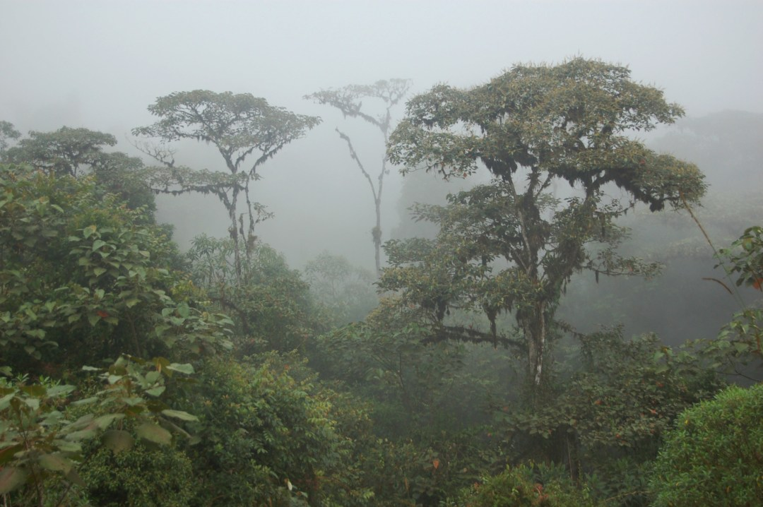 Misty rainforest horizontal view