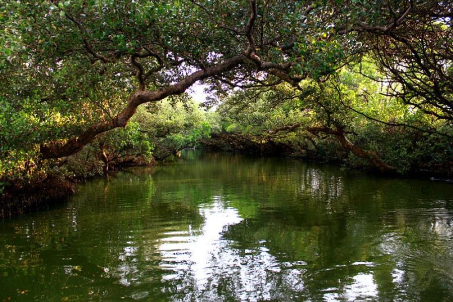 [台南] 四草 二訪台灣亞馬遜 – 大眾廟紅樹林竹筏港水道 (影片)
