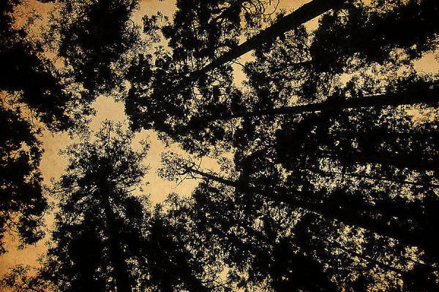 [南投] 溪頭森林遊樂區-幽靜的森林浴之旅