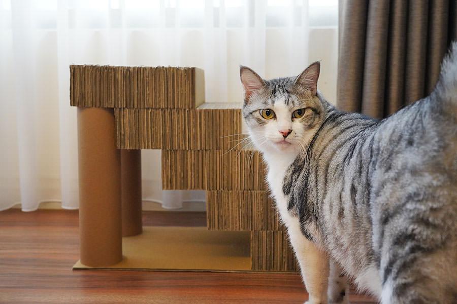 貓咪寵物樓梯、舒壓貓抓瓦楞台階~牙牙的觀景台新歡!