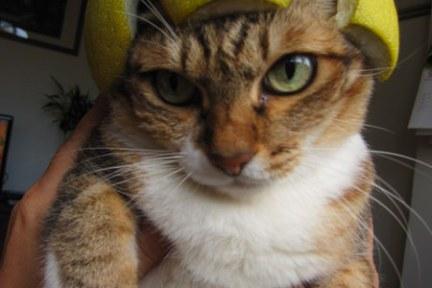 貓物║紐約紀念品 & 中秋節柚子帽