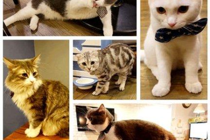 台北民生社區 | 小春日和 動物雜貨 珈琲 - 寵物貓餐廳 醉翁之意不在酒