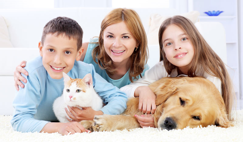Family & Pets On Clean Shag Carpeting