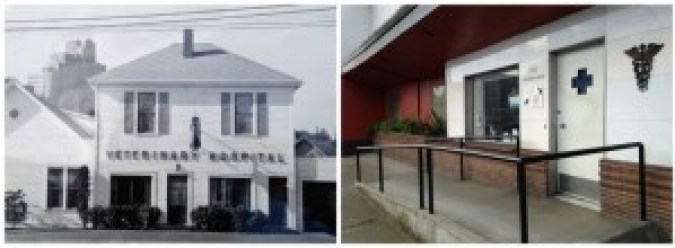 Rainier Veterinary Hospital Seattle: Then and Now