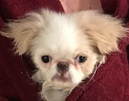 Rainier Veterinary Hospital Dog of the Month, November 2016: Lola