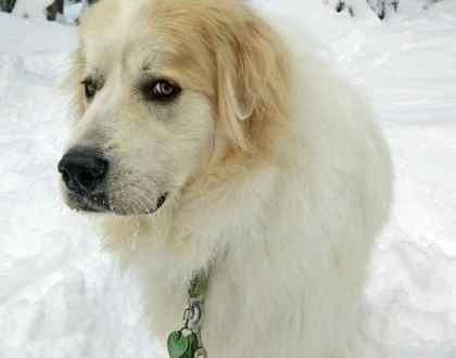 Rainier Veterinary Hospital Dog of the Month, December 2016: Bond