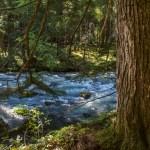 Upper Dungeness Trail, Buckhorn Wilderness, Washington State, US