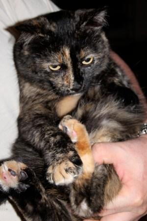 Brooke's cats Poochie Jr.