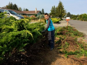 My son Sawyer helping out with the day long project of cutting these very overgrown juniper bushes.
