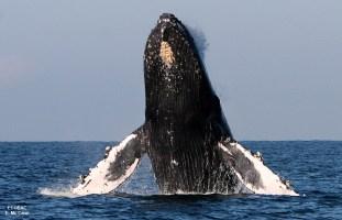 Whale Watching - Puerto Vallarta!