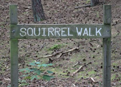 Squirrel Walk