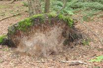 Woods near Little Budworth