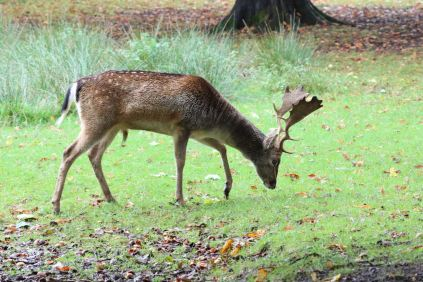 Dunham Massey - National Trust (23)