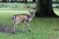 Dunham Massey - National Trust (25)