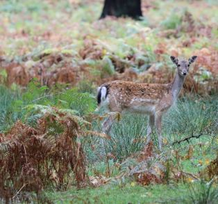 Dunham Massey - National Trust (43)