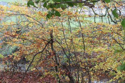 Autumn watch