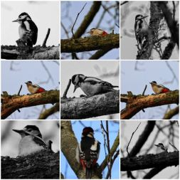 Picture Post - is there anybody who doesn't love the woodpecker