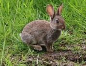 Hello rabbit