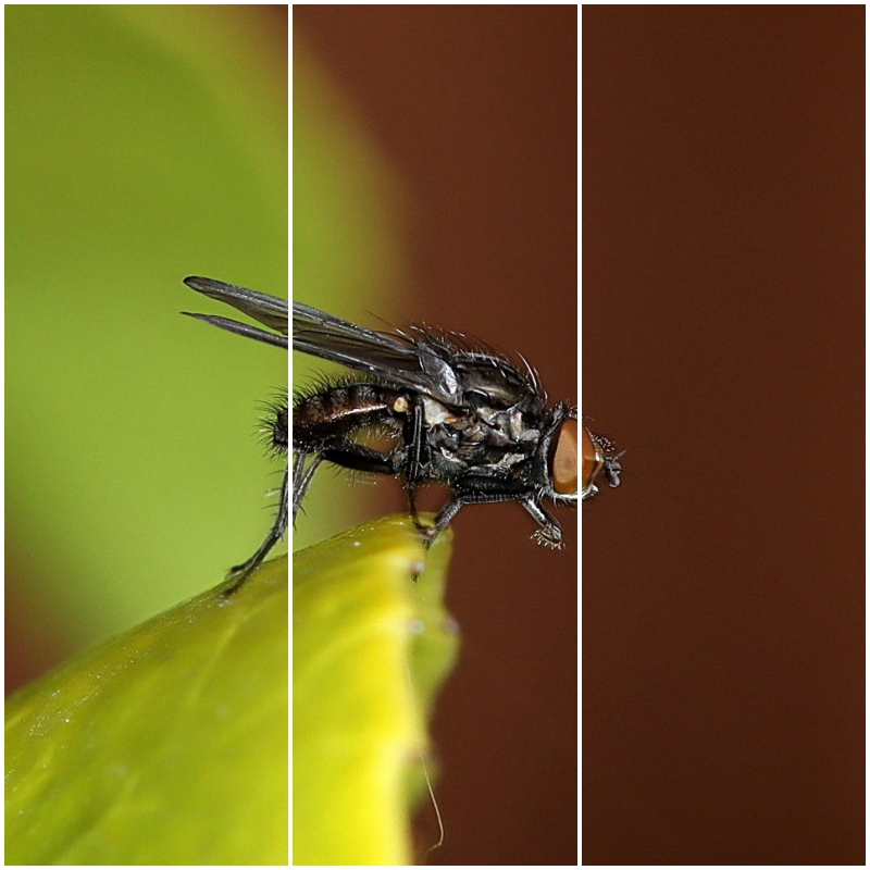 Macro photography with Sigma 107 and Neewer ring flash