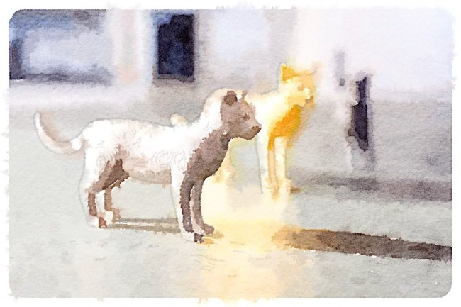 Cat_Waterlogue
