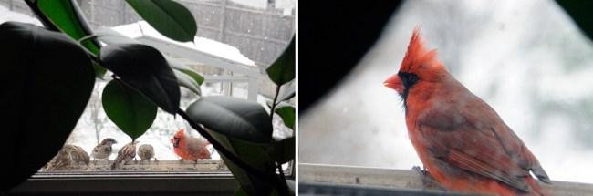 Storm_Cardinals