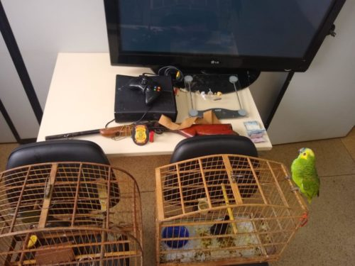Adolescente é apreendido em Luziânia com arma, drogas e animais em cativeiro