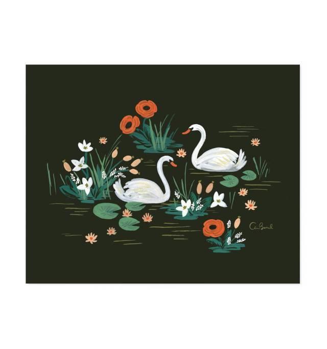 swan-illustrated-art-print-01