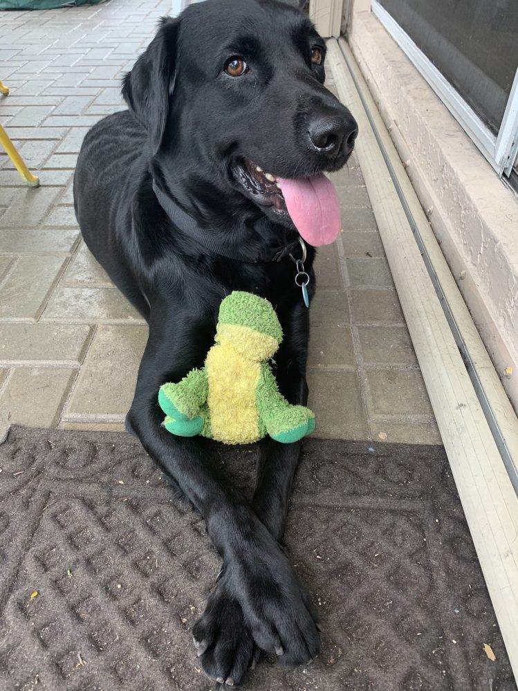 Kumba, our rescue black Lab