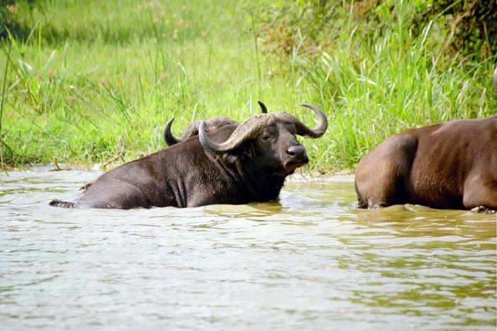 6-Day Kibale, Queen Elizabeth and Bwindi Safari