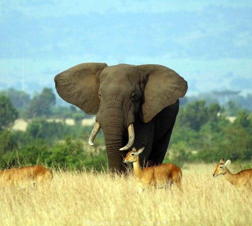 20 Days Discovering Uganda and Batwa Cultural tour