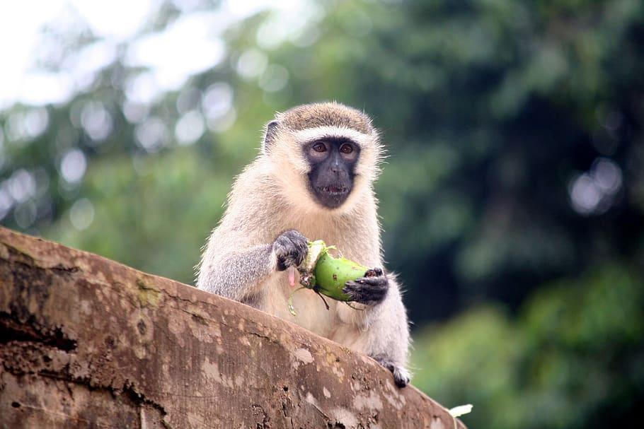 10 Top Tourist Attractions in Uganda