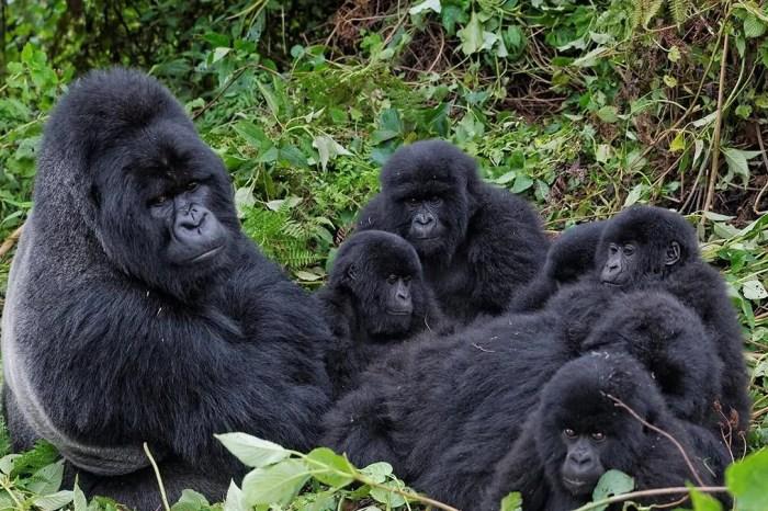 10-Day Uganda Most of Uganda Wildlife & Gorilla Trekking