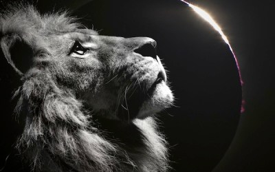 New Moon and Solar Eclipse in Leo – A Time of Presence and Wholeness