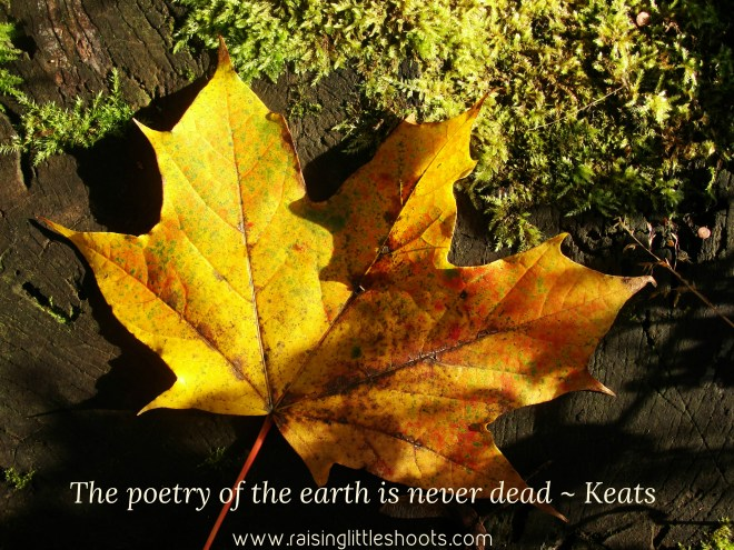 poetry of the earth