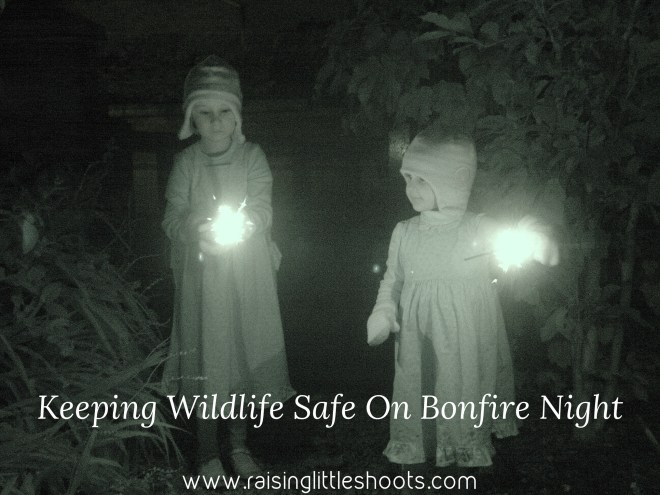 wildlife bonfire