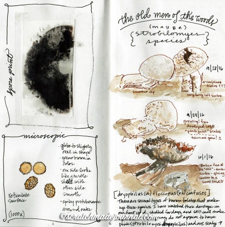 mushroom sketches 7.jpg