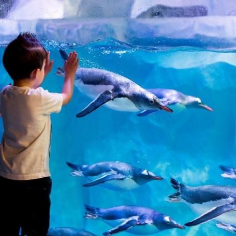 kids-w-penguins5.jpg