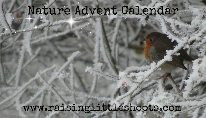 Nature Advent Calendar