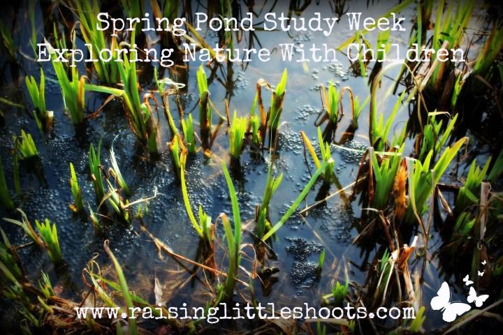 spring pond study.jpg