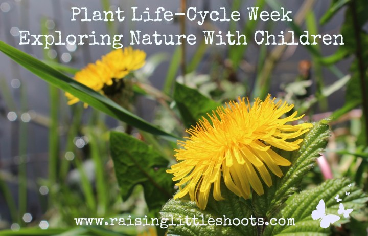 plant life cycle week