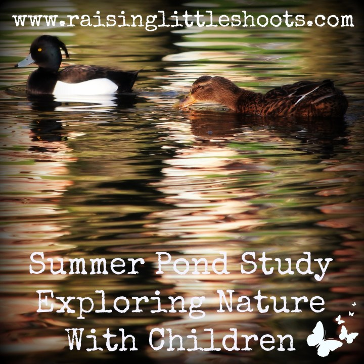 Summer Pond Study.jpg