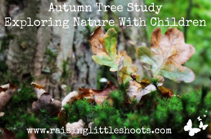 Autumn Tree Study copy.jpg