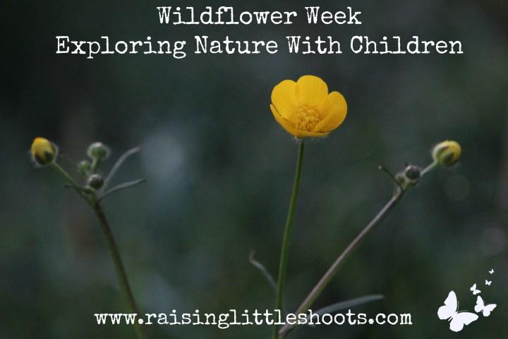 wildflower week.jpg